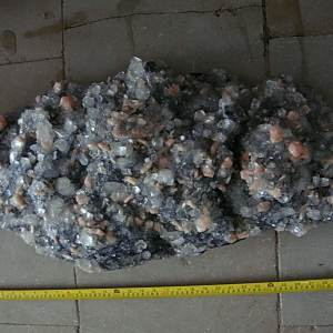 large-specimens-3