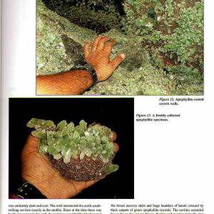 mineralogical_record_2008_4